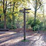 Sherrards Wood, Hertfordshire by John Fogarty