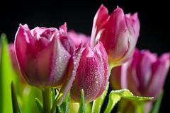 Spring  //  Frühling