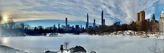Siberian Husky absorbs The Frozen Lake Manhattan