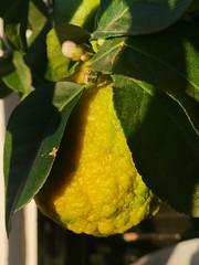 yellow vitamin