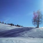 Flare of Winter  (Rollei 35SE / Ektachrome E100)