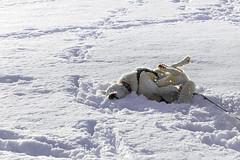 Chic, la neige !  - Plateau du Bénou
