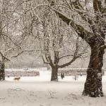 Campus West in the snow 2 by Sheila Clementson