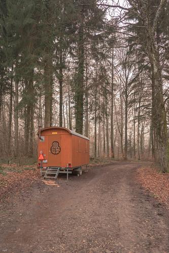Bois de Vernand-Dessus