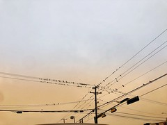 little birds at sunrise