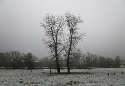 Winterbaum 1