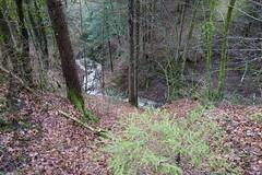 Nant Sec @ Forêt de Lanfon