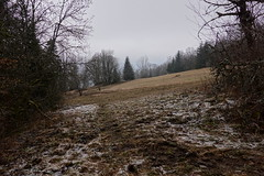Forêt de Lanfon
