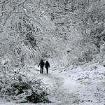 A Winter's Walk in Sherrardswood Park by JOHN REDDINGTON