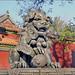 Lion gardien dans le temple des Lamas (Beijing, Chine)