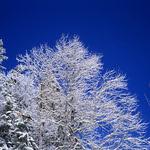 Frosting   (Rollei 35SE / Ektachrome)
