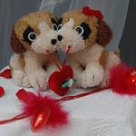 St-Valentin_2011_22