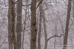 Winter 2020-21-74.jpg