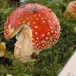 Expo Mycologique 2013