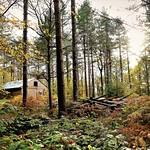Woodshed at Oaklands woods by Richard Goldthorpe