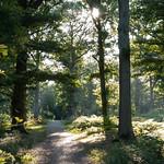 Sherrards Wood, Morning 2 by John Fogarty