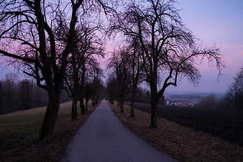 Baumallee Schloss Starhemberg bei Sonnenuntergang