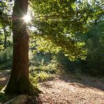 Sherrards Wood, Morning by John Fogarty