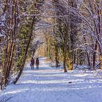 Sherrards Wood after snow Martin Burrage by Martin Burrage