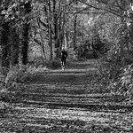 Sherrards Wood Martin Burrage by Martin Burrage