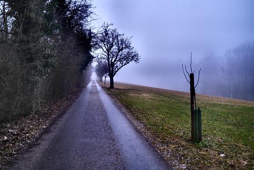 Schlossalle im Nebel