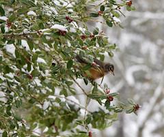 Robin 2 Feb 20 21