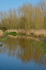 River Beam