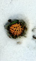 Gum ball in snow