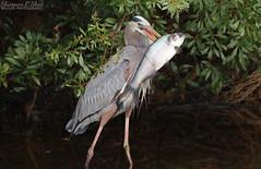 Birds with Prey