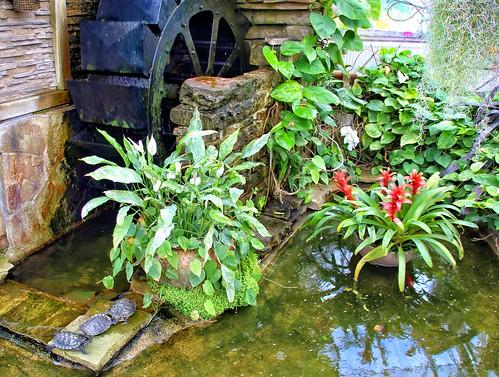 Allan Gardens Conservatory ~ Toronto Ontario -  Canada - Paddle  wheel Garden