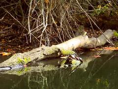 Quiet Backwater