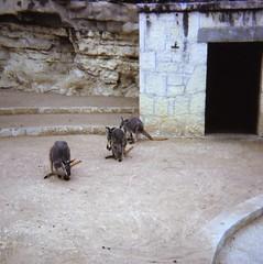 San Antonio Zoo - 1979
