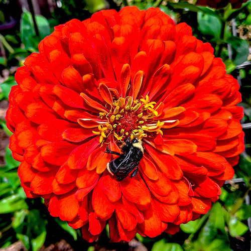 Bumblin Bee