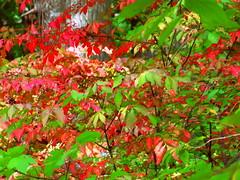 Autumnal Transition