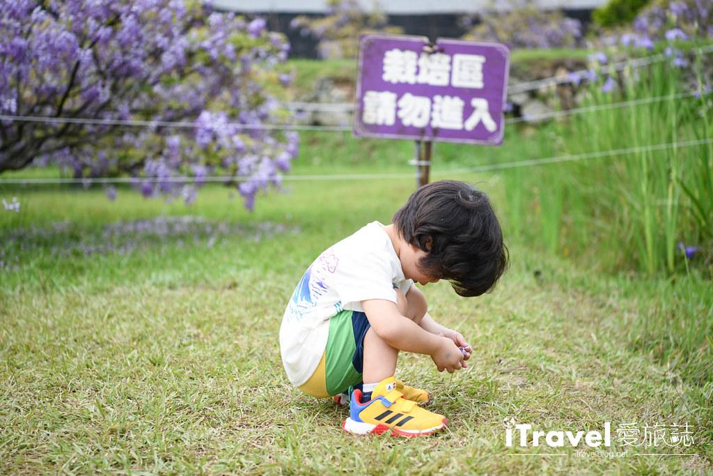 紫藤咖啡園 Damshui Wisteria (62)