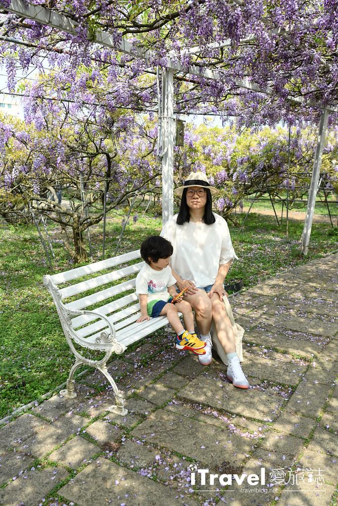 紫藤咖啡園 Damshui Wisteria (39)