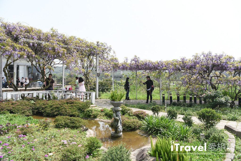 紫藤咖啡園 Damshui Wisteria (5)