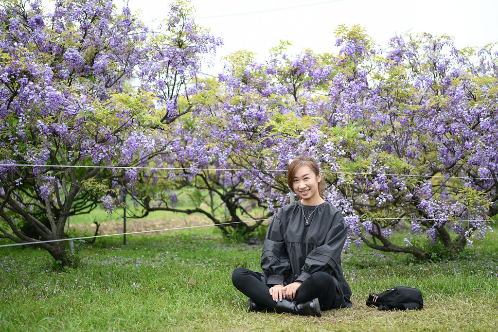 紫藤咖啡園 Damshui Wisteria (60)