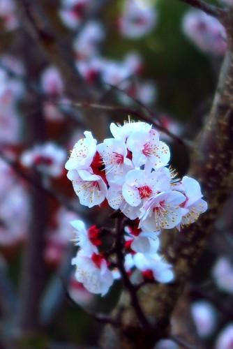 Quasi primavera