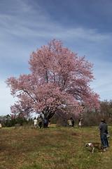 National Arboretum 27 Mar 2021  (295)