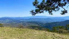 Monte Morello 2021