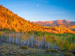 Last Dollar Road Telluride Autumn Colors Colorado Aspens Fall Foliage Fuji GFX100 Fine Art Landscape Nature Photography! Elliot McGucken Master Medium Format Fine Art American West Photography! Fujifilm GFX 100 & Fujinon FUJIFILM GF Lens