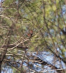Bird in branches 1