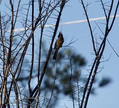 Bird in branches 2