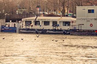 226 - Paris en Février 2021 - les mouettes jouent sur la Seine au Pont d'Austerlitz