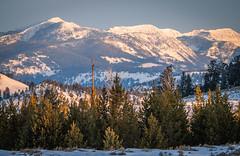 Yellowstone National Park Winter Sunrise Sony A7R4 Montana Fine Art Landscape Nature Wildlife Photography! Elliot McGucken Fine Art American West Photography! Sony A7R 4 & Sony FE 200-600mm f/5.6-6.3 G OSS Lens 1.4x Teleconverter Lens SEL14TC