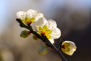 Japan_OSAKA_Flower