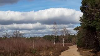Maashorst , spring 2021