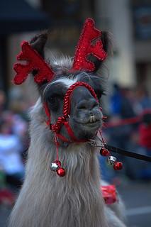 Disguised As A Reindeer