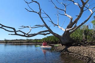 views from the Yak...Salt River Florida